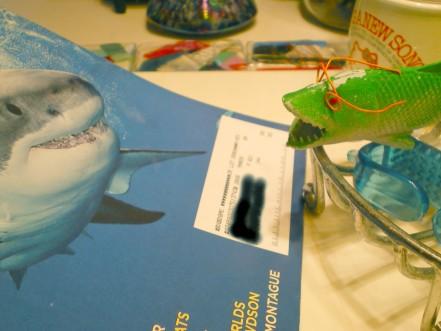 SharkyReadsSharkNEWSweb