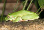Shhhhhhhhhh! Sleep Froggy Sleep!